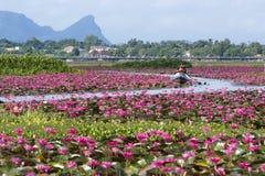 Talay Noi Wetlands, Phattalung. A vast lake full of waterlilies of Talay Noi Wetlands, Phattalung, Thailand Royalty Free Stock Image