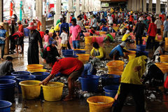 Talaythai seafood market, Thailand Royalty Free Stock Photo