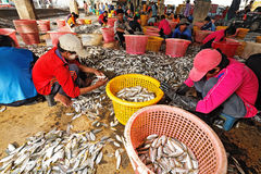 Talaythai seafood market, Thailand Stock Photo