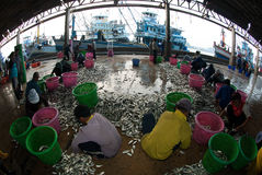 Talaythai seafood market, Trading center of fish and seafood produce. Stock Images