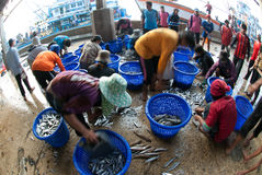 Talaythai seafood market, Trading center of fish and seafood produce. Royalty Free Stock Photography