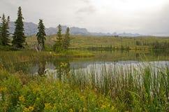 Talbot Lake Stock Foto