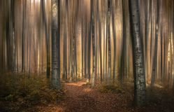 Tale forest VI royalty free stock photography
