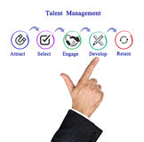 Talent  Management. Presenting diagram of Talent  Management Royalty Free Stock Photography