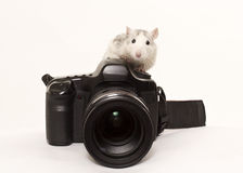 Talented photographer royalty free stock photos