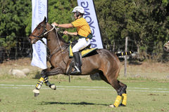 Talented Polocrosse Player Stock Photo