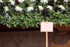 Talerz na bambusowym kiju przeciw chryzantemy tłu, Tokio, Japonia ramowy tekstu ilustracyjny wektora Zdjęcia Stock