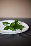 Talerz z zielenią opuszcza jako symbol wegetarianizm lub dieta Zdjęcie Stock