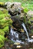 talezh весны святой стоковые фотографии rf