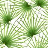 Talipot Modelo tropical inconsútil de la rama y de las hojas de la palma Ilustración del vector ilustración del vector