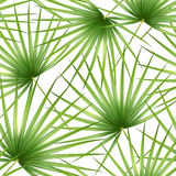 Talipot. Seamless tropical pattern of Palm branch and leaves. Vector illustration. vector illustration