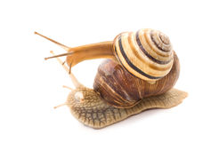 Talk of two snails.  Royalty Free Stock Images