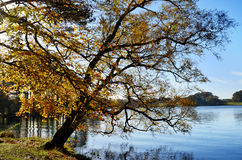 Talkin le Tarn, Brampton, avec l'arbre surplombant Photos stock