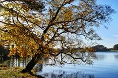 Talkin Tarn, Brampton, med den överhäng treen Arkivfoton