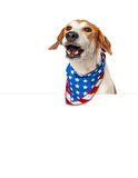 Talking American Patriotic Dog With Banner Royalty Free Stock Photo