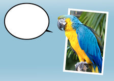 Talking Bird. Bird with bubble for your text. What would you like to say? Express yourself Royalty Free Stock Image