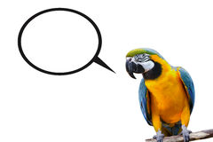 Talking Bird. Bird with text bubble for user to fill in Royalty Free Stock Image