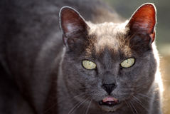 Talking Cat Stock Photo