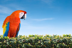 Talking Parrot. Pearch on a fence. Space for text stock images