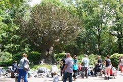 Talking tree Stock Photos