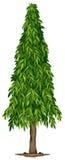 A tall ashoka tree vector illustration