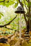 Tall autumn mushroom Stock Photography
