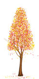 Tall autumn tree. Yellow tree illustration with extra image in png format with transparent background Royalty Free Stock Images