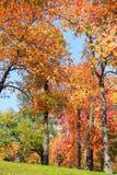 Tall autumn trees Stock Photography