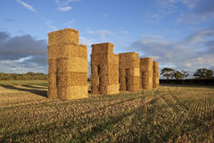 Tall bales in evening light Royalty Free Stock Image
