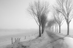 Tall bare trees besides a country road Stock Photos