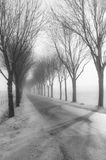 Tall bare trees besides a country road in winter Stock Photos