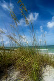 Tall beach grass Stock Photography