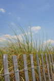 Tall Beach Grasses. Wooden fence, and blue sky. Classic beach scenery Royalty Free Stock Photography