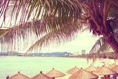 Tall, beautiful palm trees hang over the sea, on the shore stand thatched umbrellas, sunny paradise. tropical. Asia Royalty Free Stock Photo