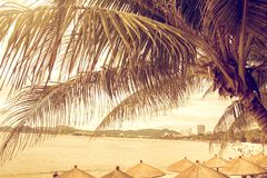 Tall, beautiful palm trees hang over the sea, on the shore stand thatched umbrellas, sunny paradise. tropical royalty free stock photography