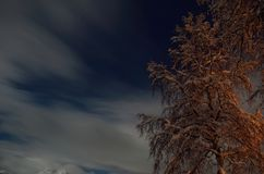 Tall birch tree in winter with star filled sky Stock Image