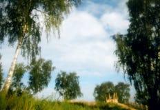Tall birch trees, blue sky, soft focus foto. Stock Photo
