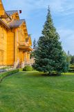 A tall blue fir-tree on a green lawn in front of a large country wooden cottage under a blue sky-blue sky. resting-place. For your design royalty free stock image