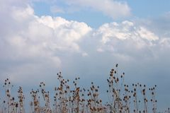 Tall weeds and a beautiful sky Royalty Free Stock Images