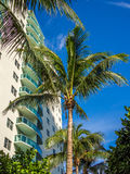 Tall building at tropical resort Royalty Free Stock Images