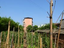 Tall Buildings in Chinese Rural Areas stock image