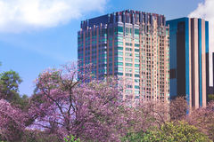 Tall buildings with pink flowers Stock Image