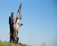 Tall burnt tree stump with horizonal orientation and room for text Royalty Free Stock Images