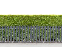Tall bush hedge with black wooden fence Seamless endless patter. N stock image