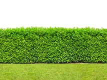 Tall bush hedge with grass isolated on white. Seamless endless. Pattern stock image