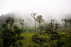 Tall cloud forest trees Stock Images