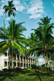 Tall coconut palm trees Stock Photo