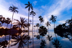 Tall coconut palm trees at twilight sky reflected in water Stock Images