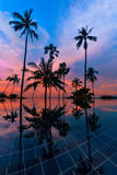 Tall coconut palm trees at twilight sky reflected in water Stock Photos