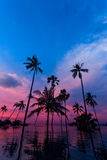 Tall coconut palm trees at twilight sky reflected in water Royalty Free Stock Photos